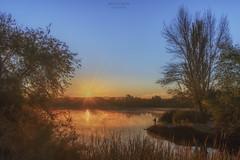 Amanecer pescando. (jetepe72) Tags: amanecer landscape sol naturaleza laguna campillo rivas madrid pesa pescador dorado