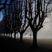 Foggy Autumn atmosphere on the Italian Lago Maggiore