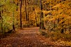 2016 Fall Colors 40 (DrLensCap) Tags: fall colors caldwell woods chicago illinois il cook county forest preserve district preserves trees tree robert kramer