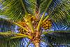 Waikiki Beach | Honolulu (M.J. Scanlon) Tags: waikiki waikikibeach honolulu hawaii beach sand water sunset sky sun ocean oahu scanlon mojo photography photographer photo picture capture trip travel coconut tree