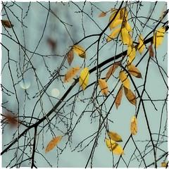 Lakeside Tree (jeanne.marie.) Tags: abstract aqua aquaandgold autumn color colorplay fall golden nature trees lake sparkle aquagold