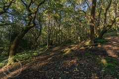 Honley Wood Trees Aug 2017 (21) (Mark Schofield @ JB Schofield) Tags: trees woodland forest wood honley huddersfield meltham root branch leafy ancient summer