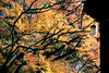 Autumn Colors (MelindaChan ^..^) Tags: gyeongju skorea 韓國 慶州 bulguksa temple 佛國寺 maple 楓葉 plant leaf leaves autumn fall foliage korean history heritage rooft rooftop tile chanmelmel mel melinda melindachan