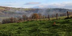 Vue depuis notre jardin, la vallée de l'Orne d'où monte la brume. (chug14) Tags: paysage suissenormande normandie pâturage vallée colline barrière bocage verdure unlimitedphotos clôture