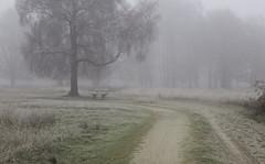 Morning walk (explored) (Theo Bauhuis) Tags: haaksbergseveen landschap mist natuurmonumenten ochtend winter fog tree path dirtroad bend bench
