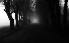 (blazedelacroix) Tags: blazedelacroix rider horse mist moody blaisedelacroix bnw trees sweden car