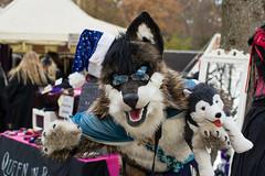 SAM_3150.jpg (Silverflame Pictures) Tags: hondachtigen castlefestwinteredition november 2017 costumeplay fursuiting cosplay wolf furry canidae furrie landgoedkeukenhof nederland lisse