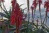 DSC_0396 (KOOLyaphotography) Tags: losangeles lagunabeach beachlife citylife laskyline griffithobservatory florallife flowers sunset beach koolyaphotography shorelife seagulls sealions seals coastline