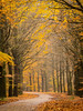 A pathway through autumn colours (2) (Rob Schop) Tags: forrest zoom autumm colours leaves tele sonya6000 drenthe boomkroonpad nederland outdoor a6000 bos 55210mmoss herfst
