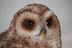 Tony the Owl (338/365)