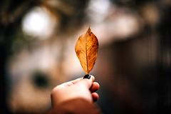(•:*´¨`*:•.☆Diℓeyℓα ☆•:*´¨`*:•) Tags: nature leaf dof hand lookslikefilm autumn grain nikon focus street vscofilm hungary streetshot colorful