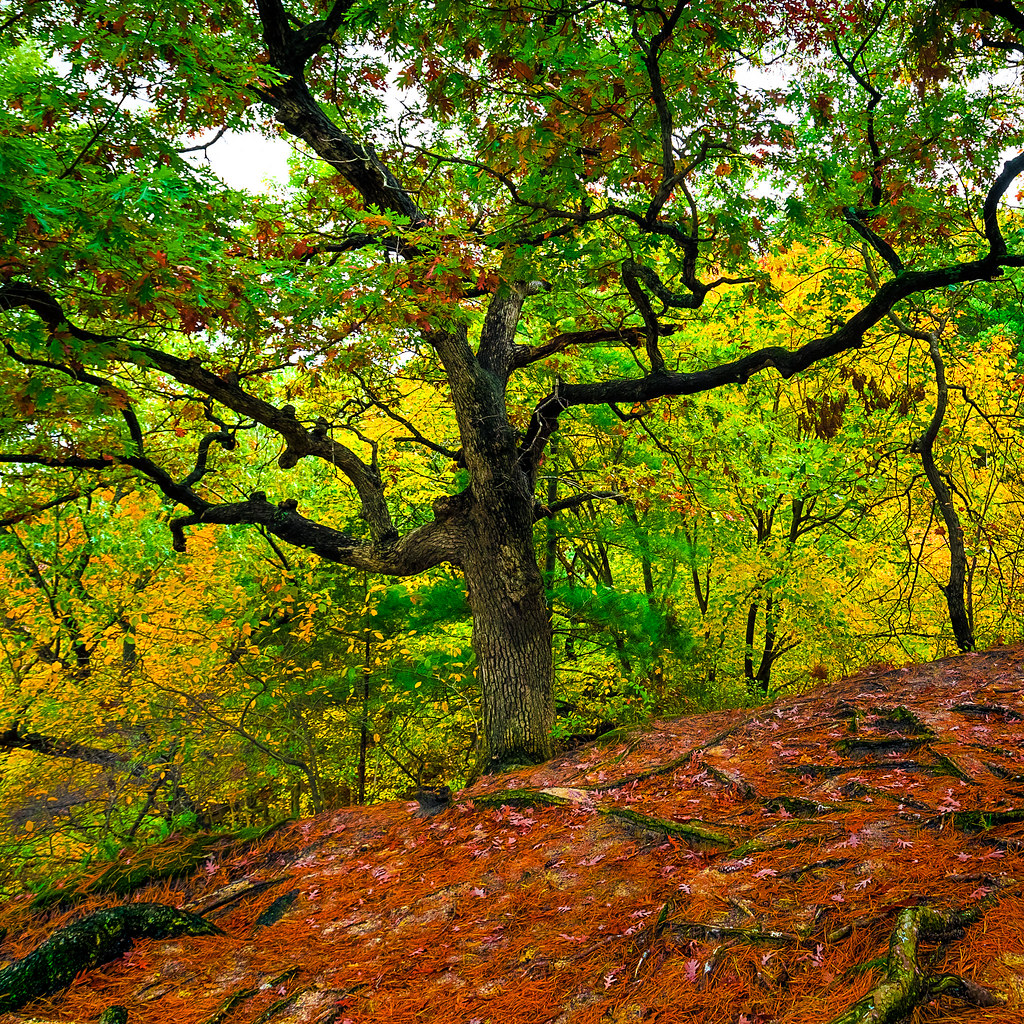 The World\'s Best Photos of color and oak - Flickr Hive Mind