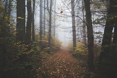 can you see me, count to three (STEPtheWOLF) Tags: autumnwoods autumn fall forest fallcolors leaf tree fog mysticmood morning austria styria canon 5d3 35mm stepthewolf