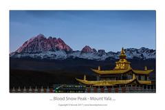... Blood Snow Peak ... (liewwk - www.liewwkphoto.com) Tags: 塔公 雅拉雪山 liewwk liewwknature liewwkphotohunters landscapeouting blood dusk sunset rgnd 2 stops mount yala mountyala