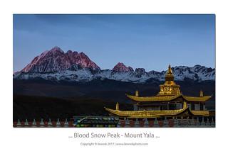 ... Blood Snow Peak ...