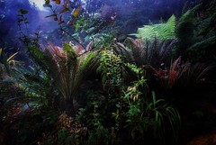 exotic garden (bialobrody) Tags: ferns plants nature exotic garden tropical