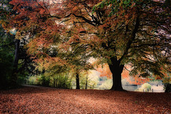 Autumn in Moor Park, Preston by karolgadge - An Autumn scene, rather more recent than the previous image.