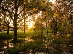 (martin_rees) Tags: sunset trees water thames ham house richmonduponthames london england autumn leaves sun landscape