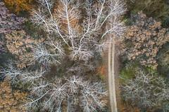 Winter Grasp (jeff_a_goldberg) Tags: aerialphotography lcfpd drone dji mavic forest nature lakewood illinois lakecountyforestpreservedepartment lakewoodforestpreserve fall mavicpro djimavicpro wauconda unitedstates us