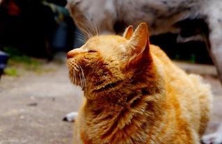 Huelo comida #Garfield #Cat