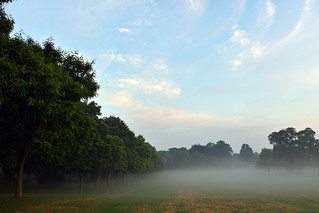 Mist as companion  -  (Selected by GETTY IMAGES)