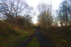 Cutting nr Hound Hill Lane    (Silkstone - Wath old railway)    November 2017 (dave_attrill) Tags: great central railway electrified woodhead sheffield victoria manchester picadilly closed 1970 1955 stocksbridge engine transpennine upper don trail penistone wortley wadsley neepsend dunford thurgoland tunnel oxspring barnsley junction huddersfield allweather cycleway bridleway footpath remains silkstone 2016 1981 dove valley november 2017 dovevalleytrail worsbrough worsbroughbranch