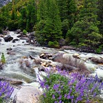 Rapids on the Merced River (Yosemite National Park) thumbnail