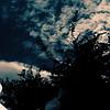 Le museau dans les nuages ! (haijee13) Tags: chien dog museau nuages clouds vitre reflet arbres trees tête dans les france ciel sky