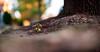 ILCE-7M2-02200-20171107-1723-Pano // Konica Hexanon AR 85mm 1:1.8 (Otattemita) Tags: 85mmf18 bokehpanorama bokehrama brenizermethod florafauna hexanon konica konicahexanonar85mmf18middleversion fauna flora flower nature plant wildlife konicahexanonar85mm118 sony sonyilce7m2 ilce7m2 85mm cnaturalbnatural ota