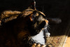 Isis & Sunshine (Donald.Gallagher) Tags: animals cats de delaware fall felines horizontal isis mammals nature northamerica pikecreek public tortoiseshell typecloseup typecolor typelightroom typeportrait typeshutterbuttonfocus typetelephoto usa woodcreek