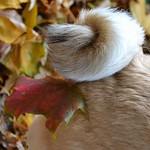 The Last Leaves Of Autumn thumbnail