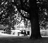 An Enlightening Conversation (thedailyjaw) Tags: gay notdifferent d610 nikon streetphotography street couple conversation seriousconvo amsterdam netherlands northholland dutch bench park parkbench trees lake pond scenic vondelpark bw blackwhite blackandwhite