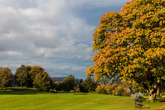 Autumn colour (Keith in Exeter) Tags: oak tree autumn golden glowing cloudy sky mountain lakedistrict nationalpark bownessonwindermere golf course links cumbria outdoor