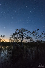 Everglades Z Tree at night (J.Coffman Photography) Tags: everglades z tree dwarf cypress astrophotography