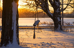 Incoming (Matt Champlin) Tags: tgif friday snow snowy cold chilly peace peaceful arctic lakeeffectsnow morning quiet idyllic country rural canon skaneateles flx fingerlakes home swing waiting nature abandoned yard gold golden snowing