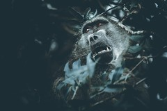 A Look of Despair (spencerjluna) Tags: lowkey wildlife sigma150600 canon5dmarkiv gamedrive safari overcast emotional despair baboon troop krugerpark southafrica