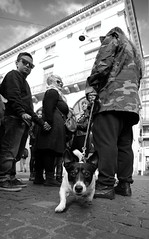 Beware of the dog... (Michael Kalognomos) Tags: dog ef1635f4lisusm canoneos5dmarkiii jackrussellterrier streetphotography blackwhite monochrome athens greece ermoustreet people bite guardian chain