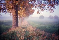 Novembermorgen (Ulla M.) Tags: november nebel fog bäume trees olympusxa selfdeveloped selbstentwickelt 35mm kleinbild reflectaproscan10t umphotoart dorsten rangefinder analog analogue