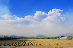VenturaFirestorm2017 (mcshots) Tags: usa california socal venturacounty coast mountains hills fire brushfire firestorm disaster flames uncontained firefighters smoke winds destruction travel dec2017 stock mcshots