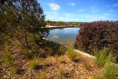 Cranbourne RBG Nov 2017 033 (Graeme Butler) Tags: water landscape history gardens australianplants architecture victoria australia