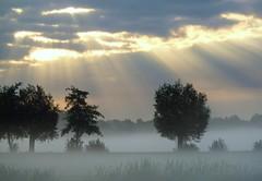 Morning, the Netherlands (Frans.Sellies) Tags: p1100206 landscape bilt debilt netherlands nederland fog mist