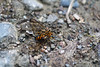 Wasp? (marthasadie) Tags: ecuador bellavista cloudforest mindo bosquenublado bugs insect insectidentification macro
