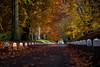 Autumn .. (Julie Greg) Tags: park tree grass nature autumn 2017 canon colours way landscape