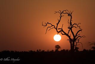 Sunset at Kruger National Park