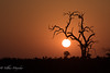 Sunset at Kruger National Park (mayekarulhas) Tags: sunset krugernationalpark southafrica safari canon