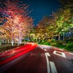 Tokyo Road thumbnail