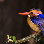 Colourful bird thumbnail