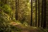 Woodland Trail (Click And Pray) Tags: managedbyclickandpraysflickrmanagr scotland argyll landscape horizontal benmore trail track path forest wood woodland scotlandargylllandscapehorizontalbenmoretrailtrackpathforestwoodwoodlandgbr