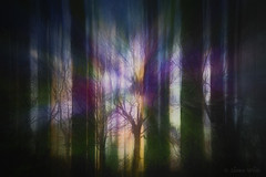 Ancient Myth (shawn~white) Tags: supernatural fujifilmxt10 icm nature shawnwhite abstract alteredstate dark dream dreamy enchanting forest glowing gold green layers magic magical multipleexposure mystery mystic powerful purple spiritual tree trees trippy wood woodland woods zoom