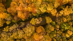 The Road (Ellen van den Doel) Tags: autumn natuur landscape season nature nederland aerial bos herfst trees november drone bomen landschap mavic forest pro liesbos netherlands fall 2017 color dji breda noordbrabant nl